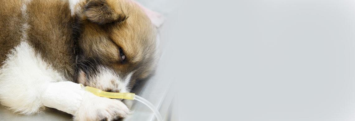 Soluzioni per infusione per animali